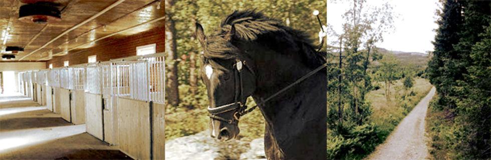 Hest hester stall stallplass malvik vikhammer trondheim